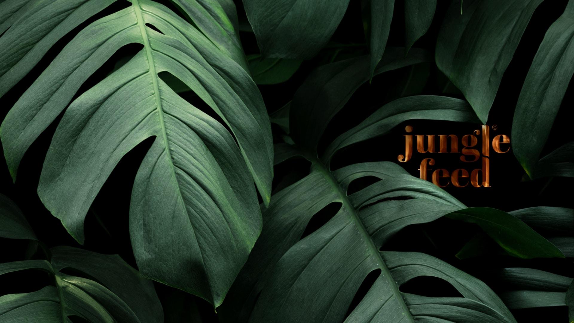 Bienvenue dans la jungle !